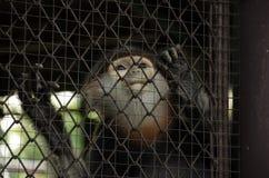Mokey en la jaula imagen de archivo libre de regalías