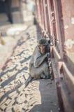 Mokey zit op de droevige alleen straat Stock Afbeelding