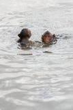 Mokeys de bébé nageant Image stock