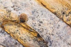Mokimarmer, moquimarmer in een rots wordt geplakt die Royalty-vrije Stock Afbeelding