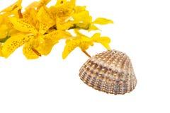 Mokkara jaunissent la fleur d'orchidée et la coquille de mer sur le blanc Photo stock