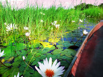 Free Mokoro Canoe Trip Stock Images - 39066554
