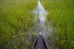 Mokoro Canoe Trip in the Okavango Delta near Maun, Botswana Royalty Free Stock Photography