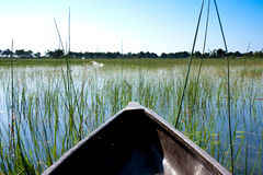 Mokoro Ride Through the Delta Royalty Free Stock Images