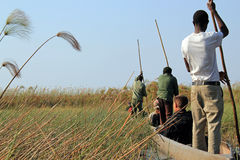 Mokoro safari royaltyfri foto