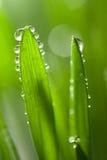mokra świeża tło trawa Fotografia Stock