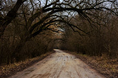 Mokra droga w lesie Zdjęcia Stock