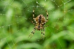 mokra pająk sieć Zdjęcia Stock