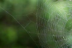 Mokra pająka ` sieć obrazy royalty free
