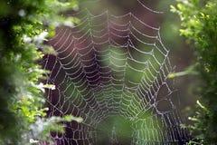 Mokra pająka ` sieć zdjęcia royalty free