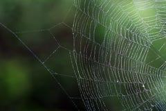 Mokra pająka ` sieć obraz stock