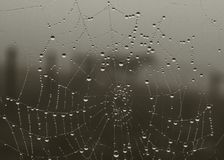 mokra pajęczyna Obraz Stock