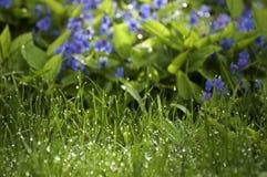 Mokra trawa i kwiaty Obrazy Royalty Free