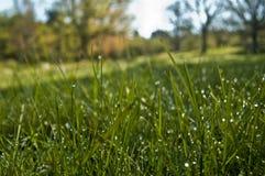 Mokra trawa przy rankiem z plamy tłem zdjęcie royalty free