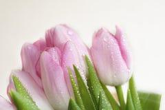 Mokra wiązka tulipany Fotografia Royalty Free