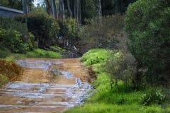 Mokra wiejska droga gruntowa otaczał mój drzewa i dom z niebieskimi niebami i chmurami - Napier, Zachodni przylądek, Południowa A obraz stock