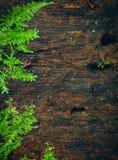 Mokrawa drewniana tekstura z mech Fotografia Royalty Free