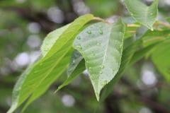 mokre liście Obraz Stock