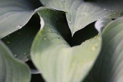 mokre liście Fotografia Stock