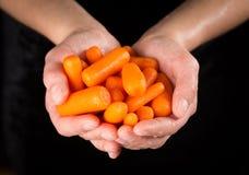Mokre pomarańczowe marchewki w kobiet rękach zdjęcie stock