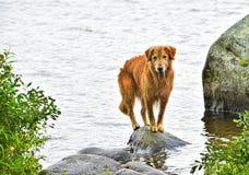 Mokre samiec psa równowagi na skale na brzeg ostrzą HDR Zdjęcia Stock