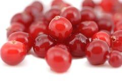 mokry świeży cranberry rozsypisko Fotografia Stock