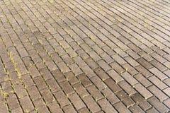 Mokry Betonowy bruk z zieloną trawą zdjęcie royalty free