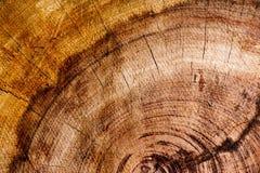 Mokry ciemny redwood tło fotografia royalty free
