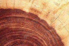 Mokry ciemny redwood tekstury tło Obraz Royalty Free