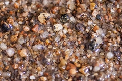 Mokry denny piasek lub malutcy otoczaki, makro- widok obrazy stock