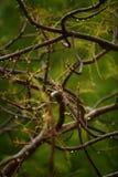 mokry gałąź drzewo Zdjęcia Royalty Free
