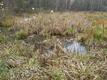 Mokry jezioro w lesie fotografia royalty free