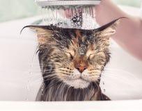 Mokry kot w skąpaniu obrazy royalty free