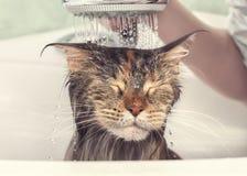 Mokry kot w skąpaniu obrazy stock