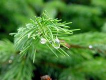 mokry kwiat Zdjęcie Stock