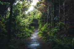 Mokry lasowy ślad Obraz Stock