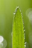 mokry liść macro obrazy royalty free