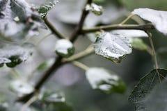 Mokry liść Po deszczu Zdjęcie Stock