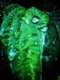 Mokry liść Po deszczu obraz stock