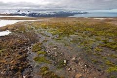 mokry nawierzchniowy Svalbard Fotografia Stock