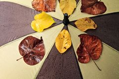 Mokry parasol Obraz Stock