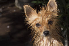 Mokry pies, skok do wody pies Zdjęcia Stock