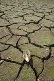 Mokry teren, naturalnie drenujący staw, nieżywa skorupa zdjęcia royalty free