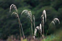 Mokry trawy flowe Obrazy Stock
