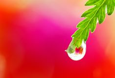mokry zamknięty liść Zdjęcie Royalty Free