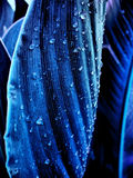 mokrzy błękit liść Obraz Royalty Free