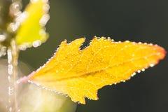 Mokrzy jesień liście Zdjęcie Royalty Free