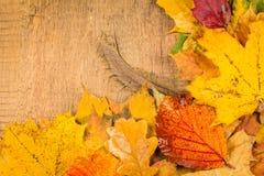 Mokrzy jesień liście Fotografia Stock