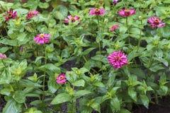 Mokrzy ogródów kwiaty obraz stock