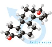 Molécula 2 de la testosterona Fotografía de archivo libre de regalías